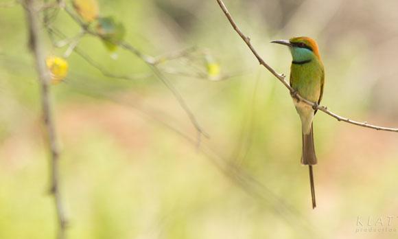 bird-watching-1